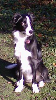 Sukie - my new exercise companion